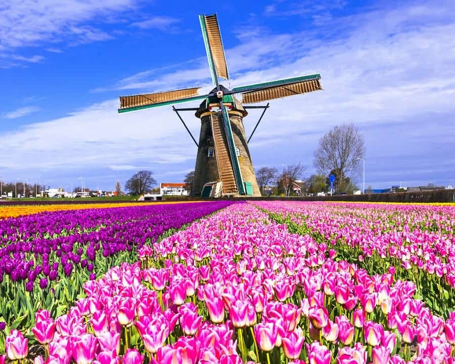 Netherlands Schengen Visa Miami